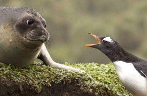 animals-talking