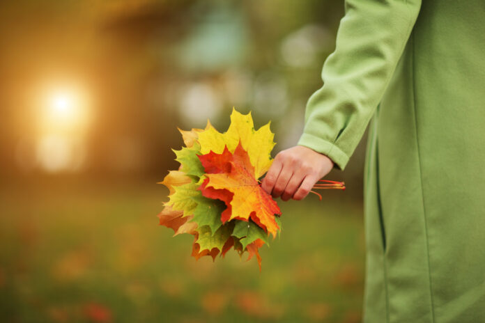 person-holding-autumn-leaves-in-hands