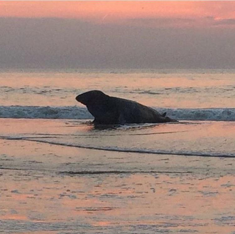 Yep! That's a seal (by @beachclubindigo)