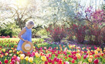 tulips-netherlands-garden