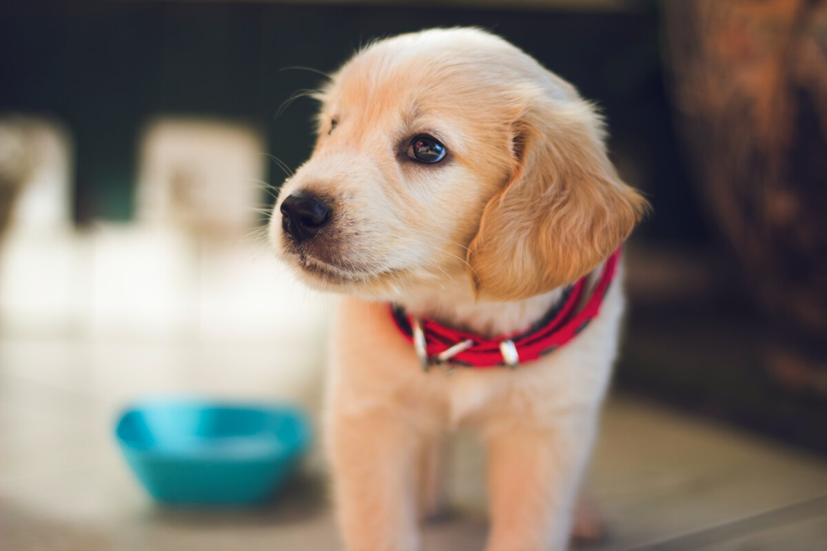 photo-of-quarantine-puppy-in-the-Netherlands