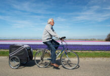 a-picture-of-an-old-man-on-a-bike-ride-in-flower-fields