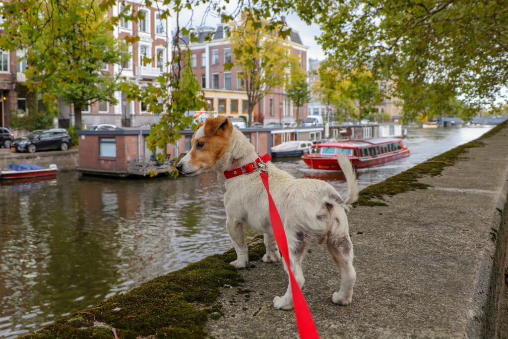 photo-of-dog-moved-to-amsterdam