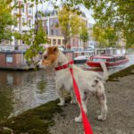 bring-dog-moving-to-amsterdam