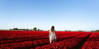 photo-of-girl-walking-through-dutch-tulip-field