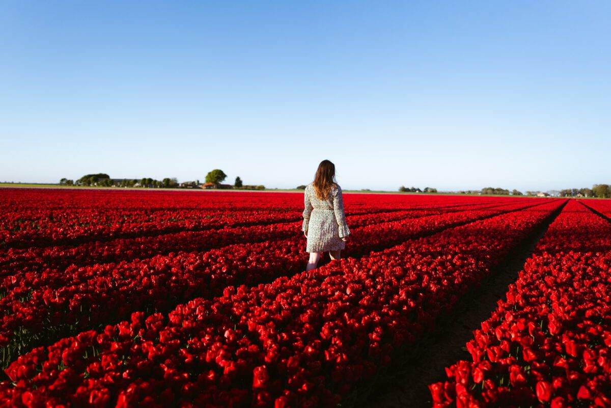 Dutch-woman-in-a-field-of-tulips-on-a-sunny-day