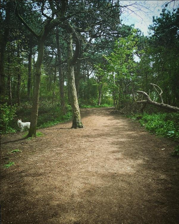 Forests! (by @buitengewoonscheveningen)