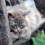 cat-3568383_1920