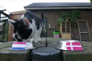 cats in the Netherlands