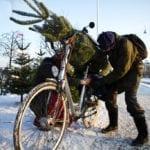 christmas tree bicycle