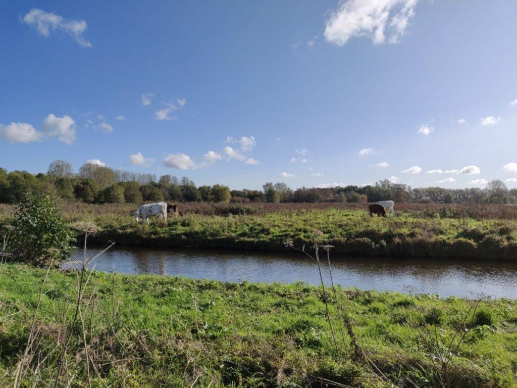 dutch landscape agriculture