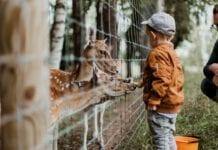 Dutch-boy-seeing-deer-in-a-zoo-in-the-Nethelands