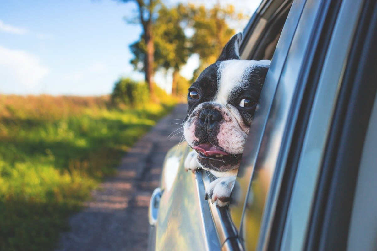 dog-in-car-going-to-uk-from-netherlands
