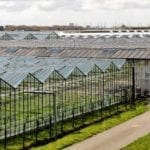 dutch agriculture innovation