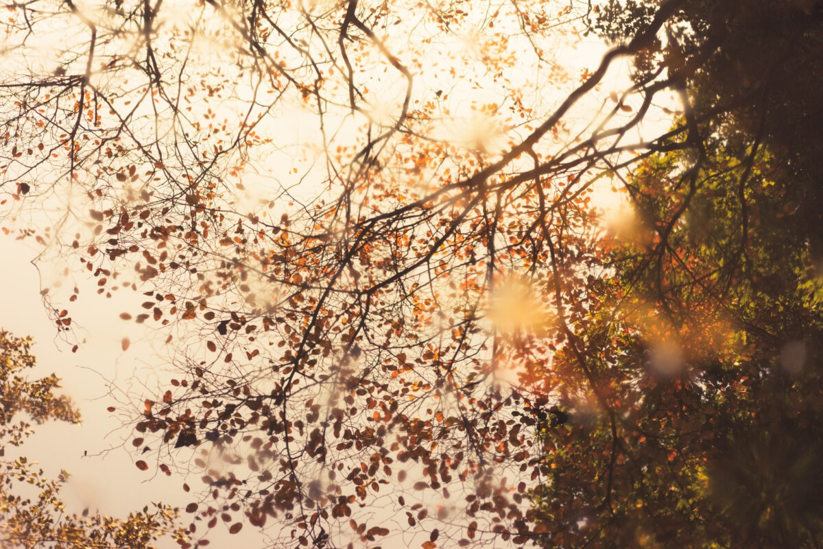 photo-of-a-tree-with-autumn-leaves