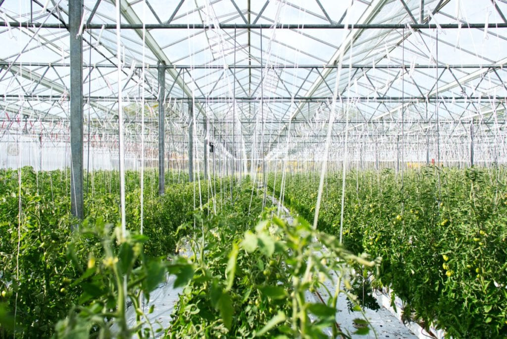 greenhouse-farming-vegetables