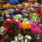 flowers-2362112_1920