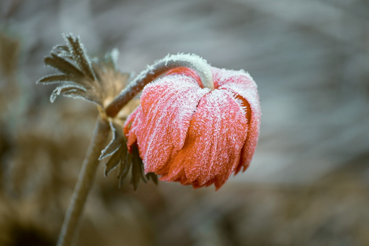 first frost of netherlands