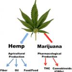 hemp-marijuana-