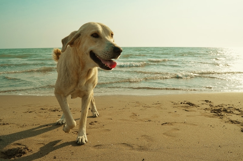 honden-aan-zee-medium