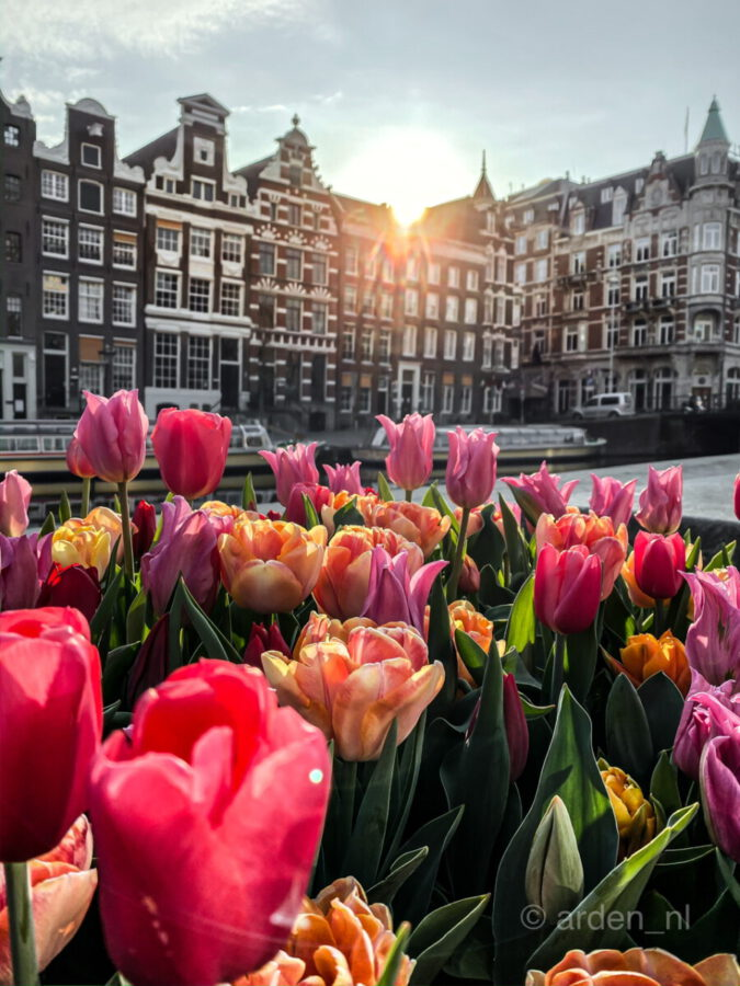Tulips by ArdenNL