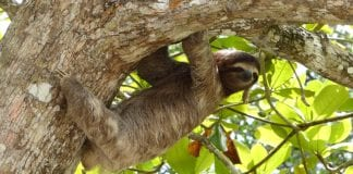 photo-of=sloth-most-Googled-Dutch-2020