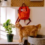 jose-hernandez-uribe-cat-in-furnished-apartment