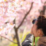 cherry-blossom-tree-amsterdam-netherlands