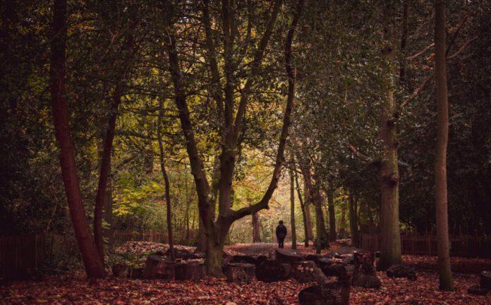 autumn-netherlands-forest