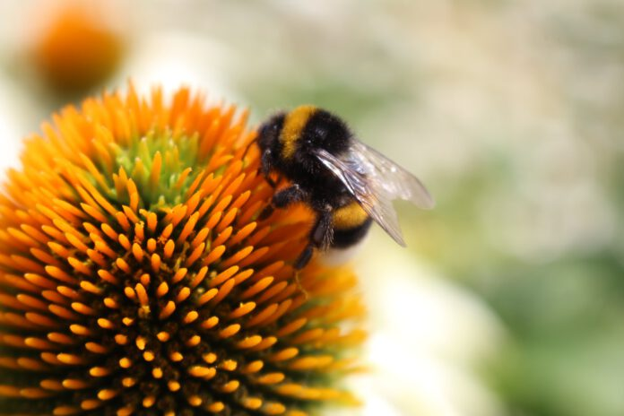 Photo-of-bee-on-flower