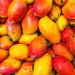 mango-to-produce-leather
