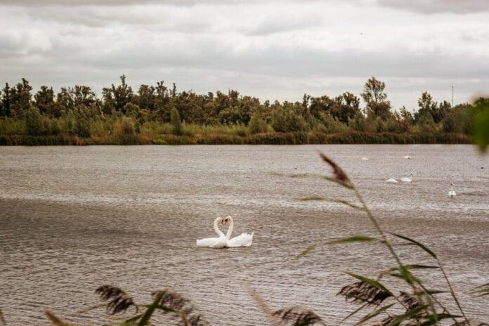 Photo-of-De-Biesbosch-national-park-the-Netherlands