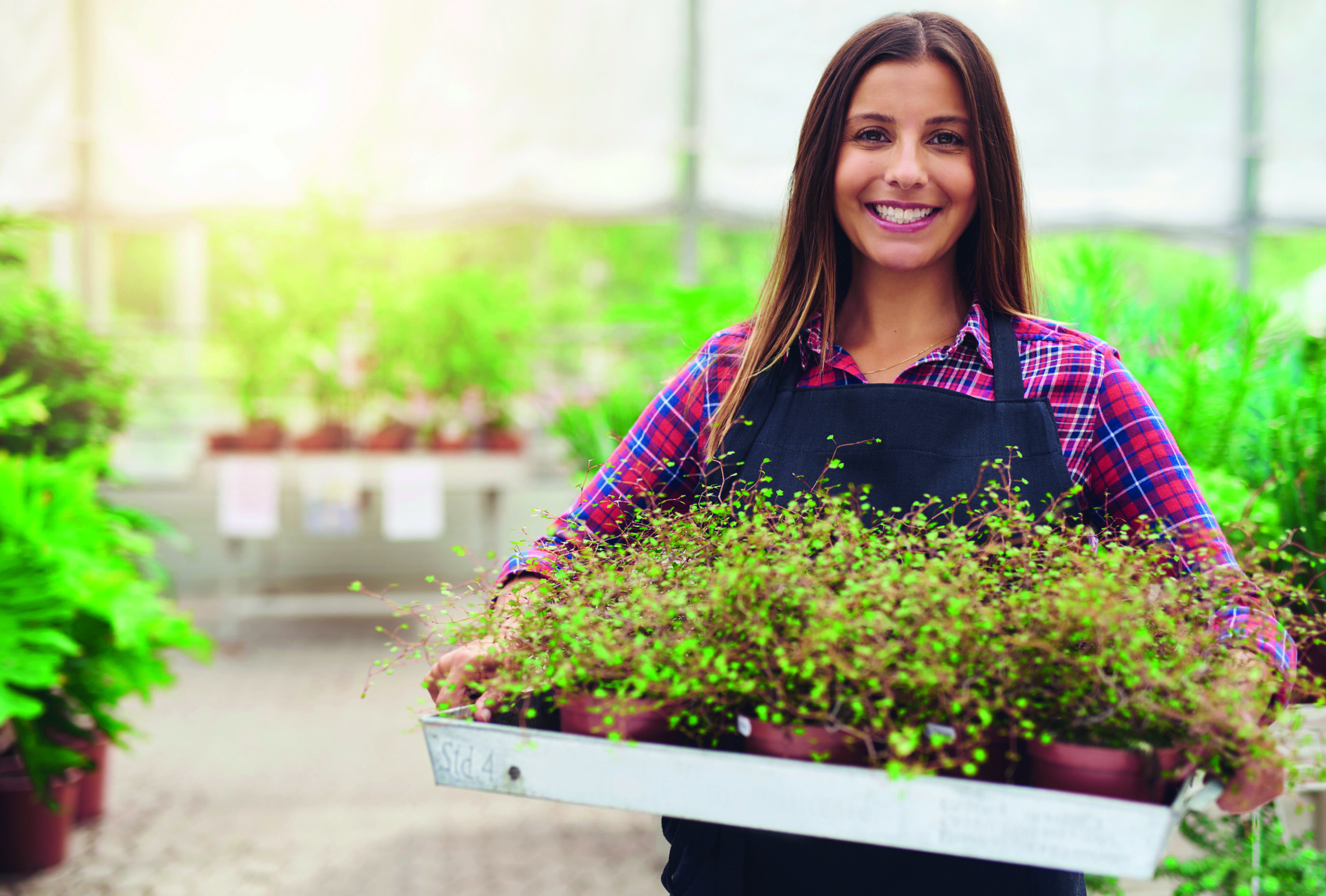 Smiling woman working in a commercial nursery selling plants to the public standing holding a tray of potted houseplants in her hands as she smiles at the camera