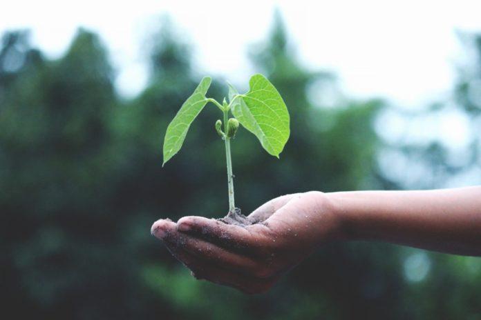 party-favors-nl-plant-seeds