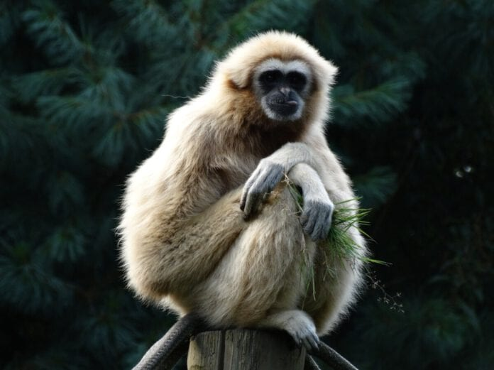 Photo-of-monkey-Dutch-idioms