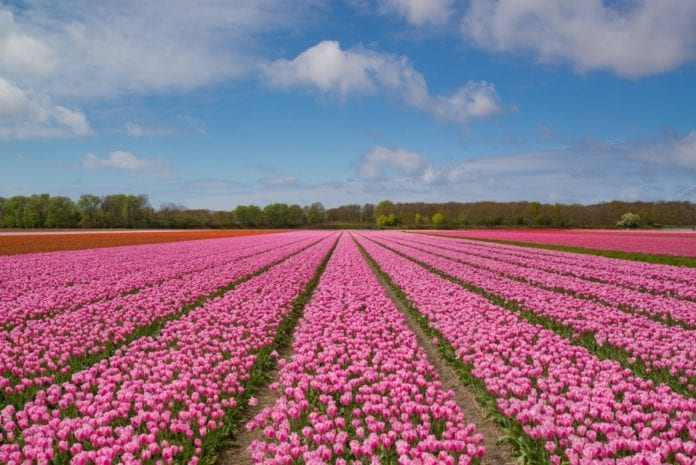 Free Things to do April in the Netherlands