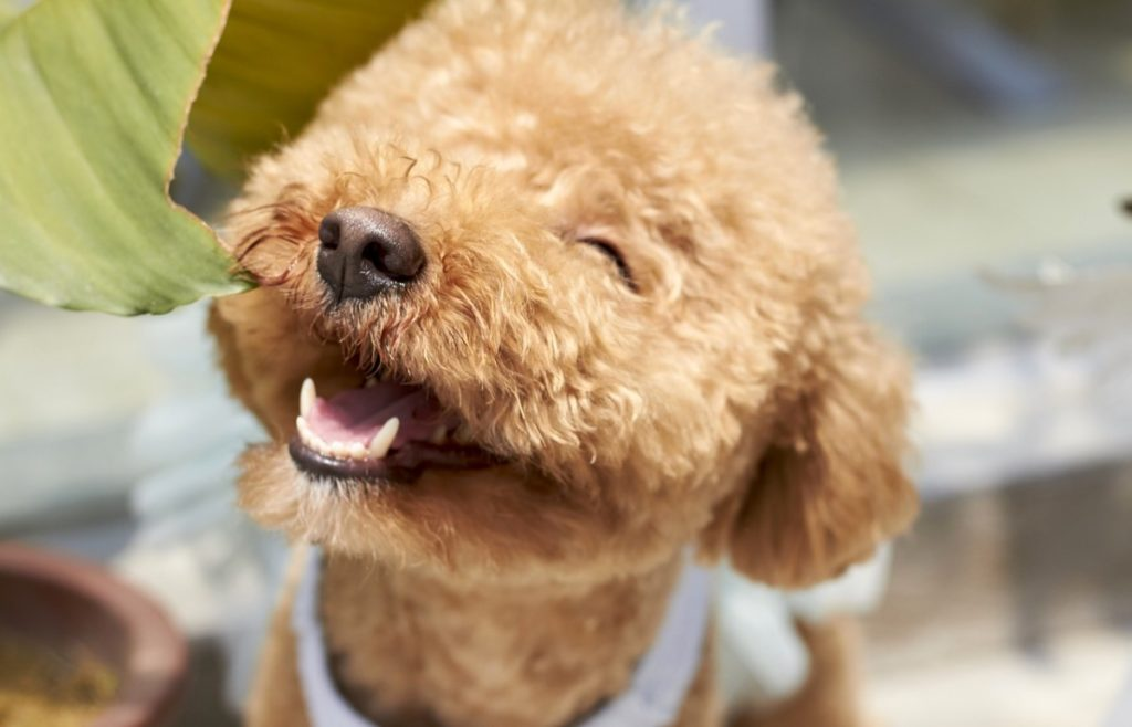 best dog breeds for Amsterdam
