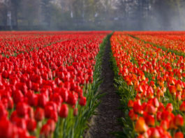 15 Things to do in Spring in the Netherlands