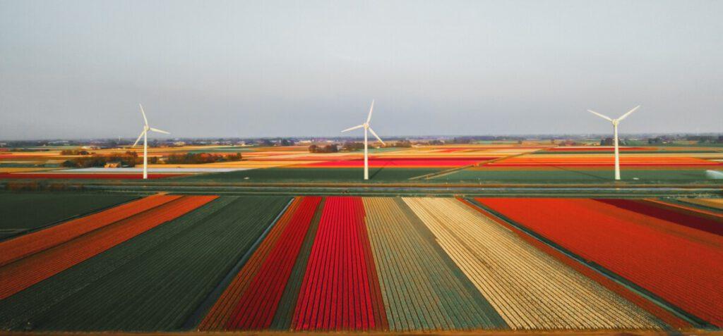 green-energy-netherlands-windmills