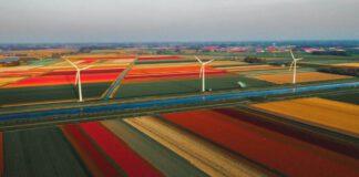 photo-of-a-dutch-tulip-field-with-wind-turbines