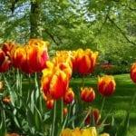 Botanic Gardens Amsterdam