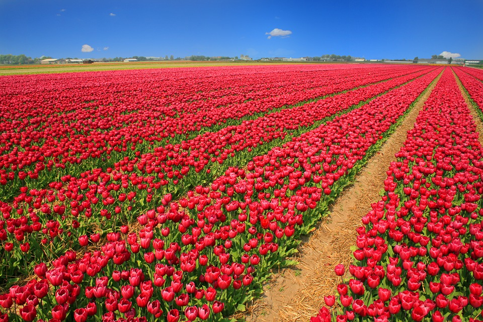things to do in the Netherlands when the sun is shining