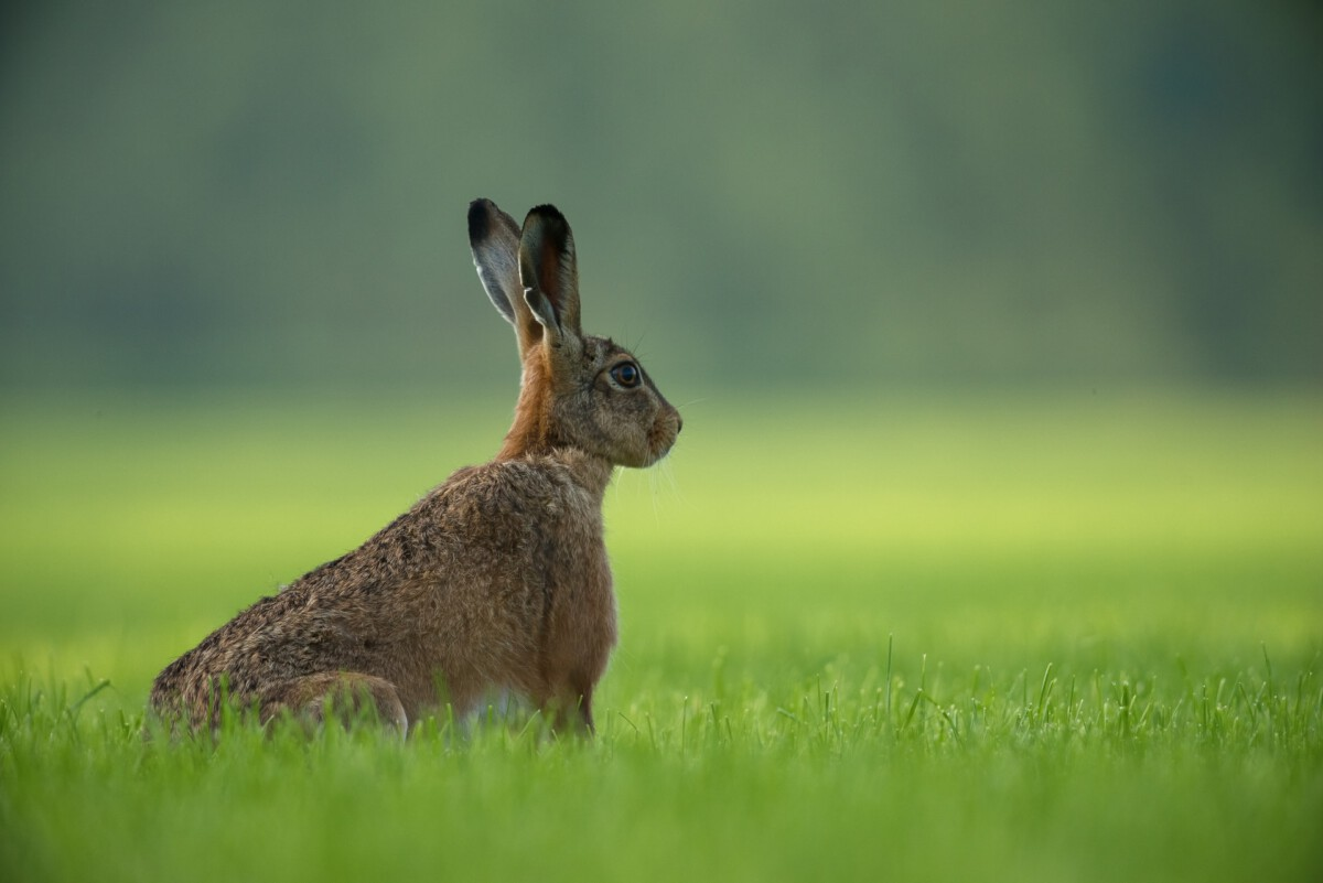 Photo-of-hare-the-Netherlands